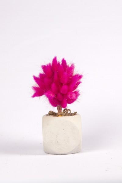 Beton Saksıda Kuru Çiçek Beton Saksıda Pembe Pamuk Otu Tanzimi