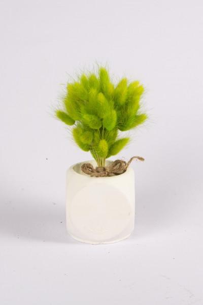 Beton Saksıda Kuru Çiçek Beton Saksıda Yeşil Pamuk Otu Tanzimi