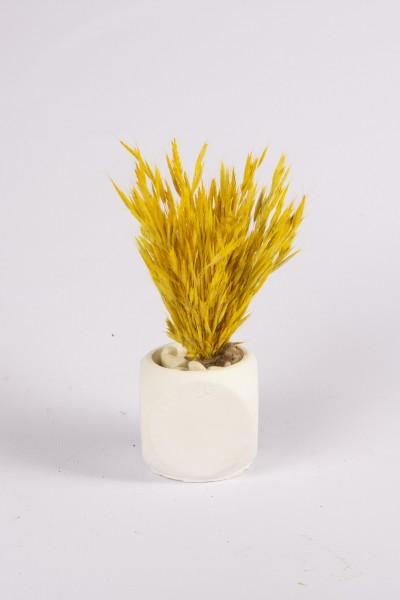 Beton Saksıda Kuru Çiçek Tanzimi Beton Saksıda Sarı Kuş Dili Otu