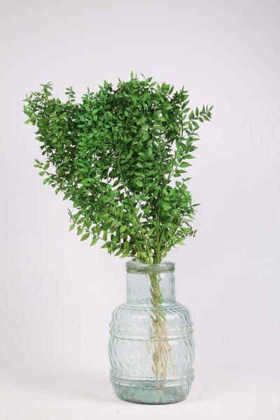 Şoklanmış Dökülmeyen Kuru Çiçek Yeşil Kokina 100 gr 60cm