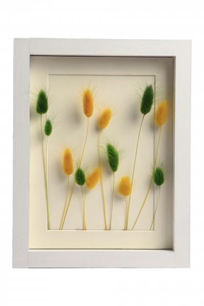 Pamuk Otu Kuru Çiçek El Yapımı 3D Tekli Beyaz Çerçeve Tablo 26x20x2,5